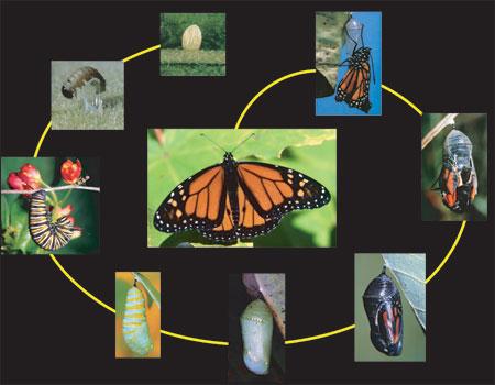 how to find a caterpillar jnside
