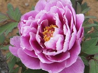 130503 花ファンタジア