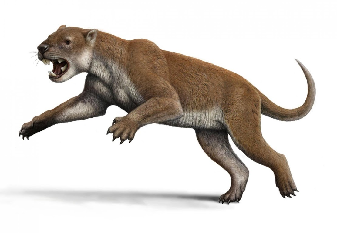 Fossils: Elbows of extinct marsupial lion suggest unique hunting style