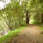 Berowra Creek beside campsite (329240)