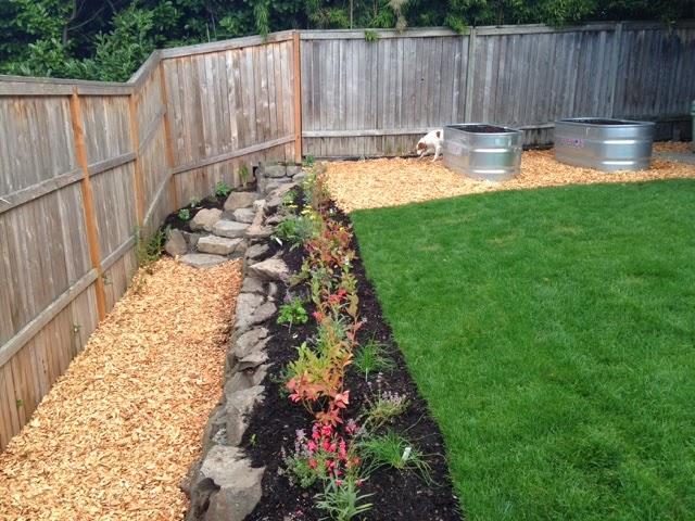 Edible landscape seattle - Landscaping along a fence ...