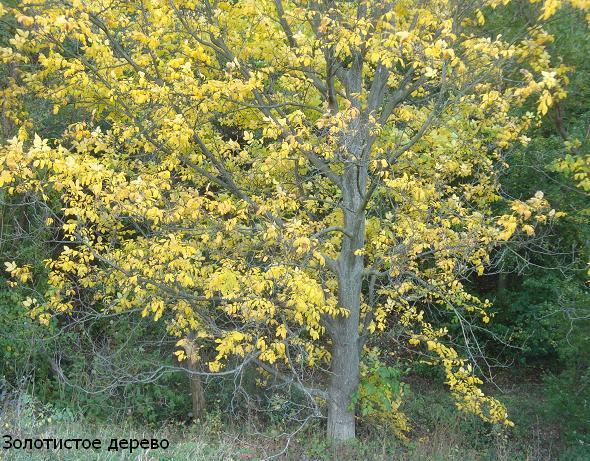 желтый цвет картинки