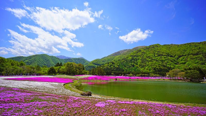 富士芝桜まつり 写真12