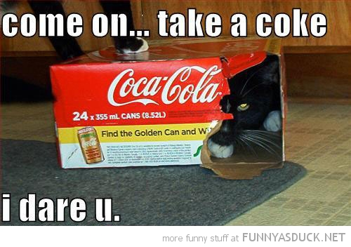 funny-take-coke-dare-you-cat-soda-box-pics.jpeg