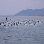 Triathlon Olimpico Pietra Ligure 2012