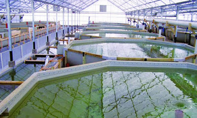 Đơn hàng nuôi trồng thủy sản cần 3 nữ thực tập sinh làm việc tại Hokkaido Nhật Bản tháng 05/2016