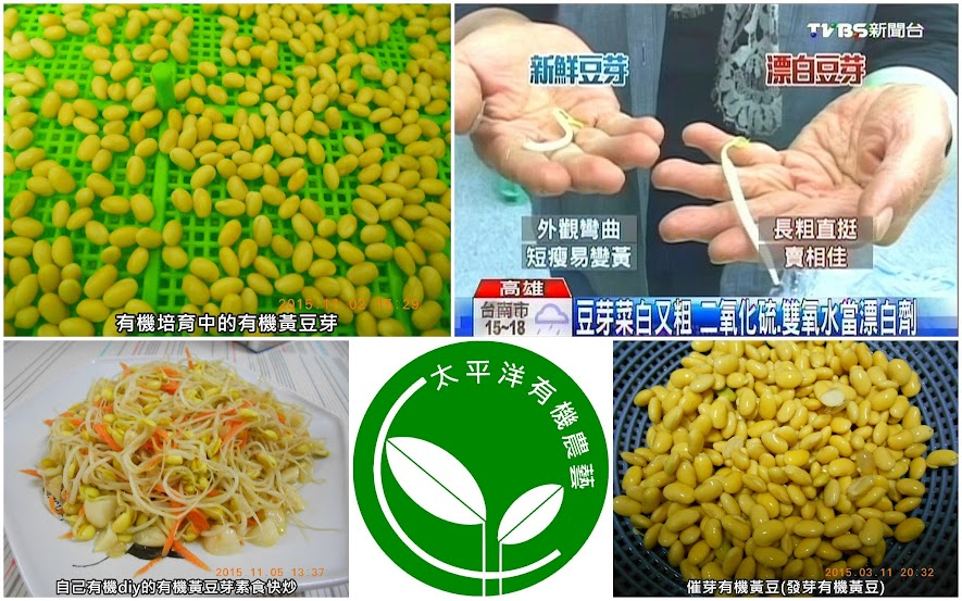 黃豆,有機黃豆,毛豆黃豆,涼拌黃豆芽,涼拌黃豆芽作法,催芽黃豆,非基因改造黃豆,基因改造黃豆,黃豆催芽,黃豆食譜