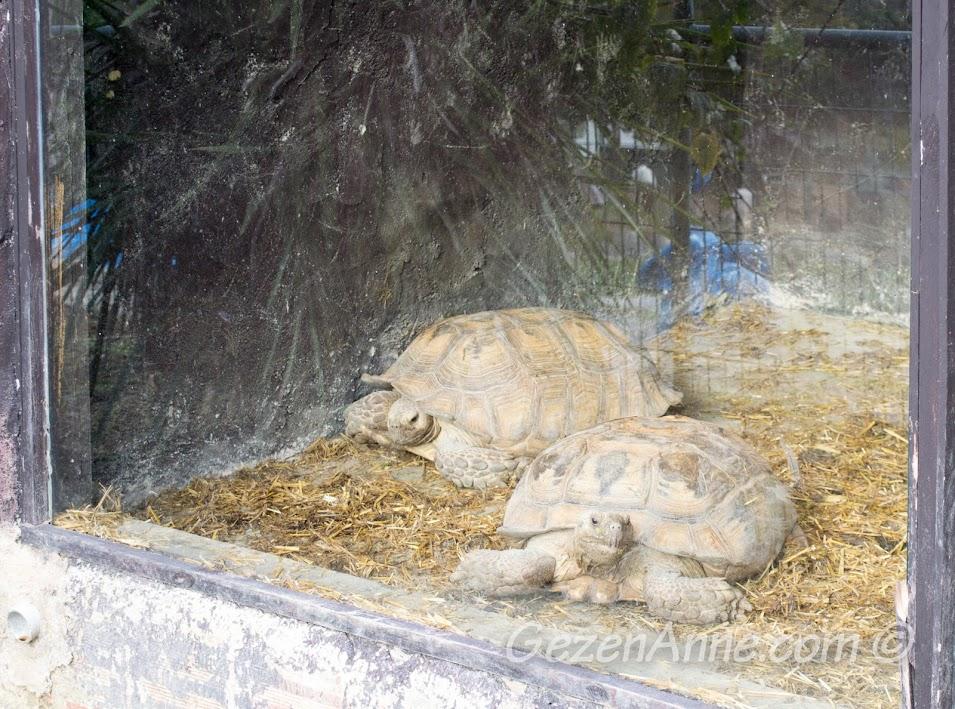 Piknik Park'taki kaplumbağalar