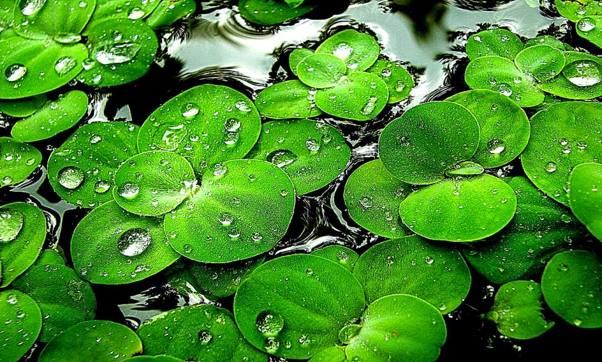 all about hd wallpaper green water android wallpapers hd