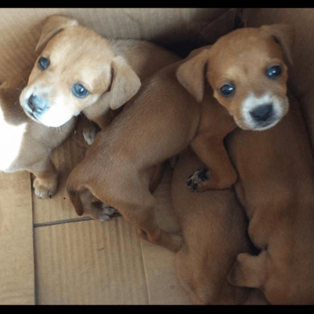Puppies - How To Spoil Your New Puppy With The Best Accessories
