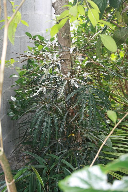Futur jardin d'orchidées!!! IMG_3567