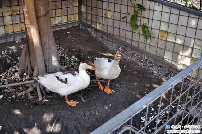 魔菇部落生態休閒農場鴨子