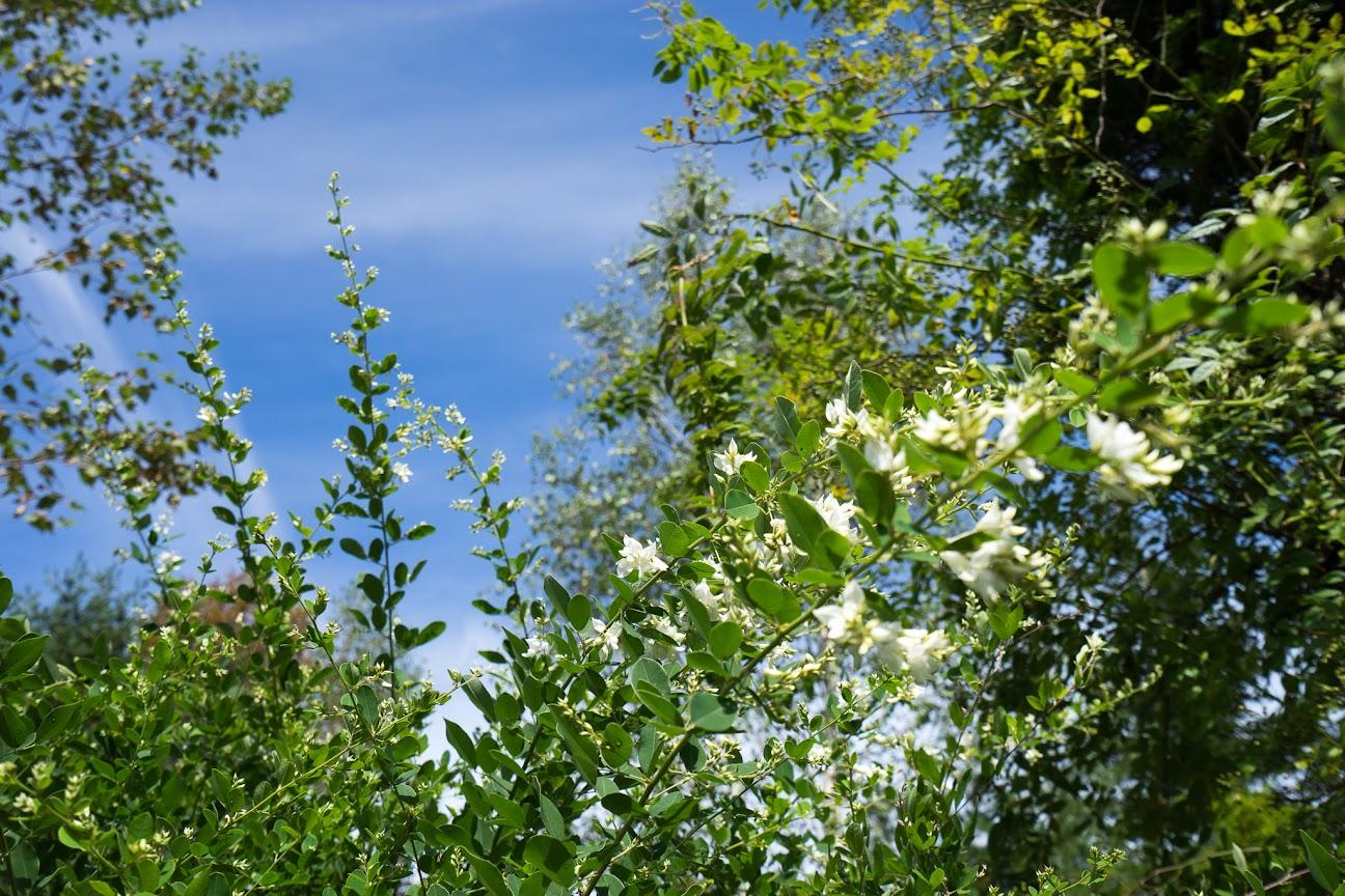 青空と光を浴びて輝く花々