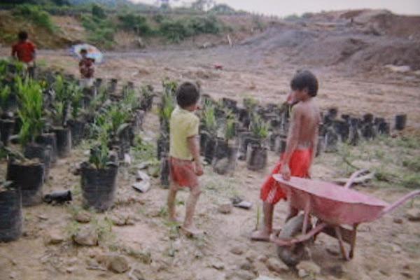 Pekerja Anak di Kebun Sawit, Pemerintah Kalbar Turun Tangan