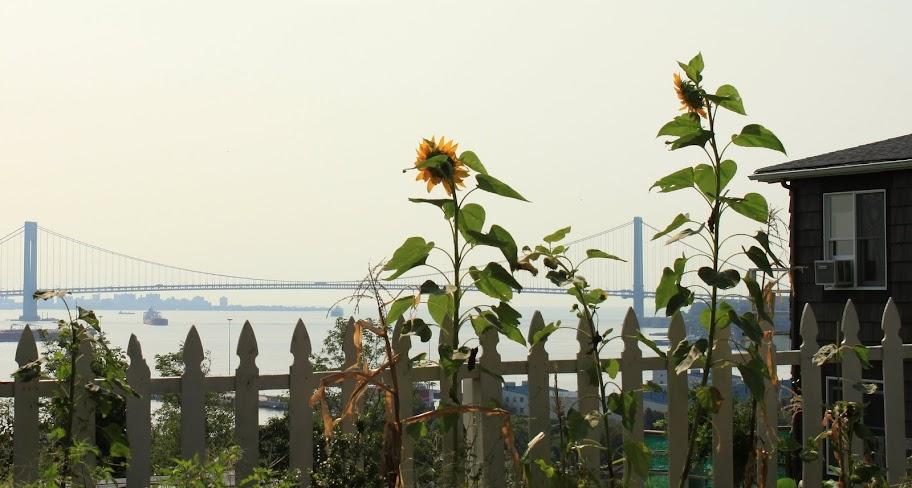 Topkins Circle, Staten Island view