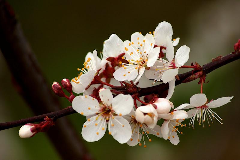 Os dias da Primavera