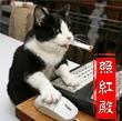 Ying Xiang Photo 25