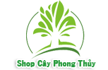 cay, cay xanh, cay de ban, cay trong nuoc, cay trong dat, cay trong nha, cay xanh qua tang, cay xanh van phong, cay xanh thuy canh, dat sach, dat tinh the, chau thuy tinh,  chau su, cay trong dat, mua cay xanh