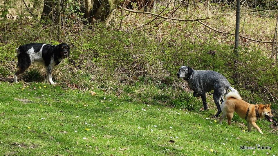 Balades canines en Nord (59)/Pas de Calais (62) - Boulogne-sur-Mer, Calais et Lille - Page 4 DSC01859