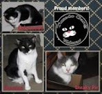Tuxie Kwee Cats
