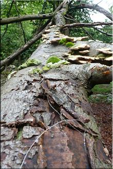Árbol caído camino a Iruatxeta