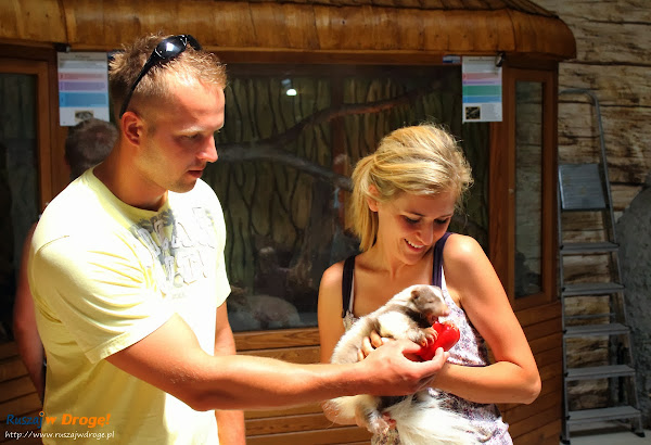 Tuchlino Park Egzotycznych Zwierzaków - pogłaskać i nakarmić skunksa