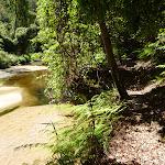 Walking beside Calna Creek (377531)