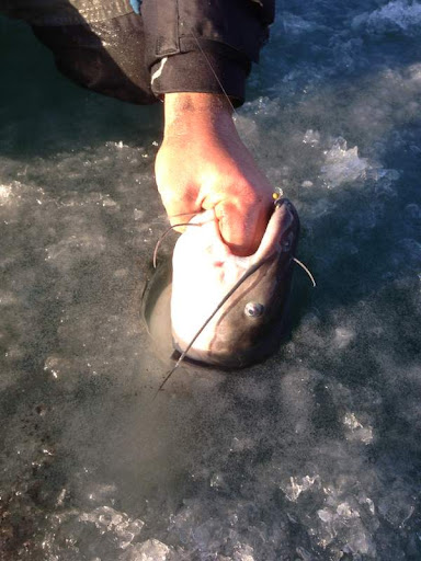 Herman brothers blog ice fishing finally for Ice fishing for catfish