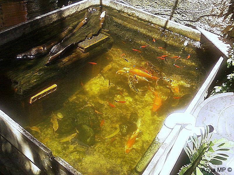 Caixa-Lago 1.000L + Filtro Balde 100L = Água Cristalina Foto-0054
