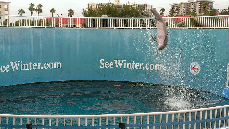 IMAG6381 A Dolphin Tale 2 Experience at Clearwater Marine Aquarium: #WinterHasHope