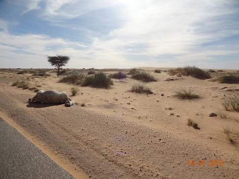 Marrocos e Mauritãnia a Queimar Pneu e Gasolina - Página 7 DSC06069