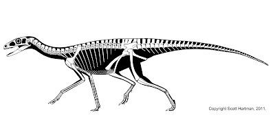 scott hartmans skeletal drawingcom
