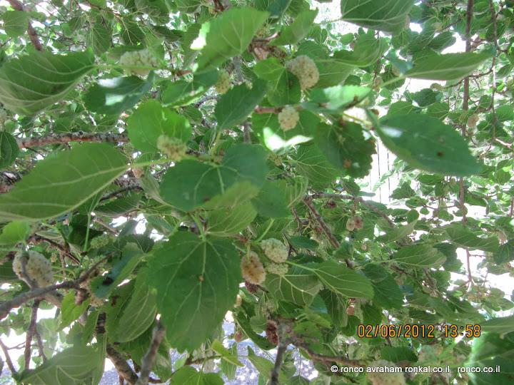 תותים קקינוח לסוף הטיול