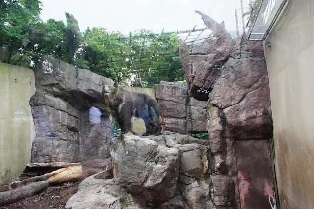 北海道棕熊
