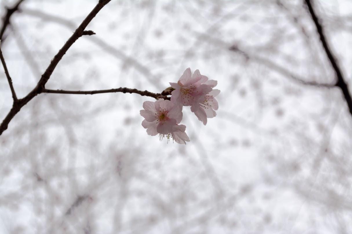http://nashiwatoshiki.hatenablog.com/entry/2014/03/16/010552
