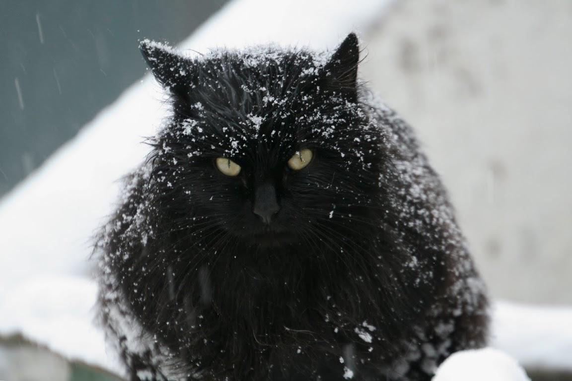 кот, Пушкин, снег
