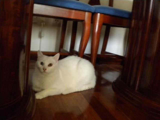 Yuna en su casita DSCN5516