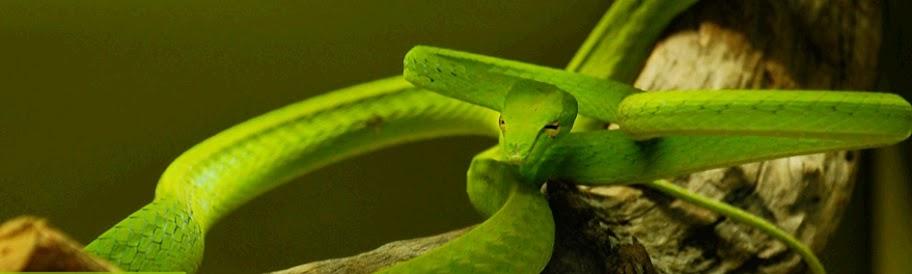 reptile house snake national zoo zoo negara malaysia