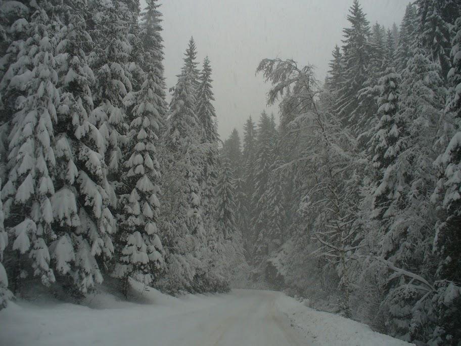 starker schneefall in bulgarien am 22 23 dezember 2011. Black Bedroom Furniture Sets. Home Design Ideas