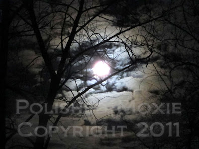 Picture of moon shining through bare tree branches in a cloudy night sky
