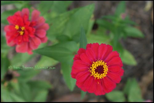 Bunga Cantik, Madu Manis
