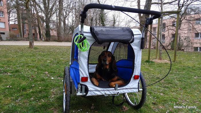 Modes de transport pour petits / vieux chiens qui fatiguent vite - Page 3 DSC02412