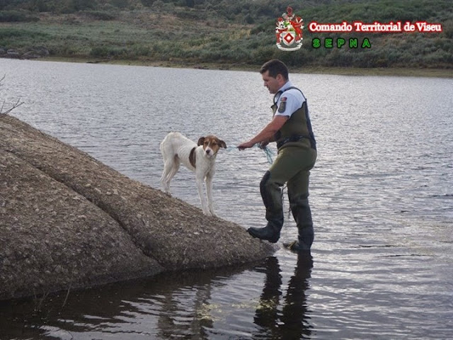 Núcleo de Proteção Ambiental da GNR de Lamego resgata cão