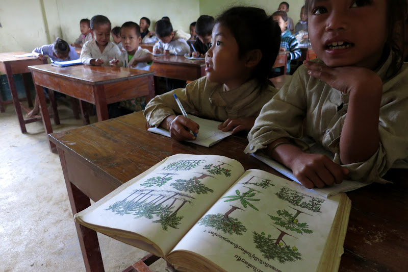 Learning about trees - village school
