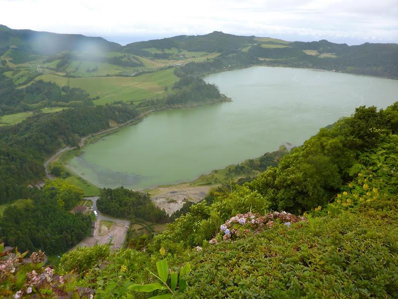 Açores- Natureza viva P1000924