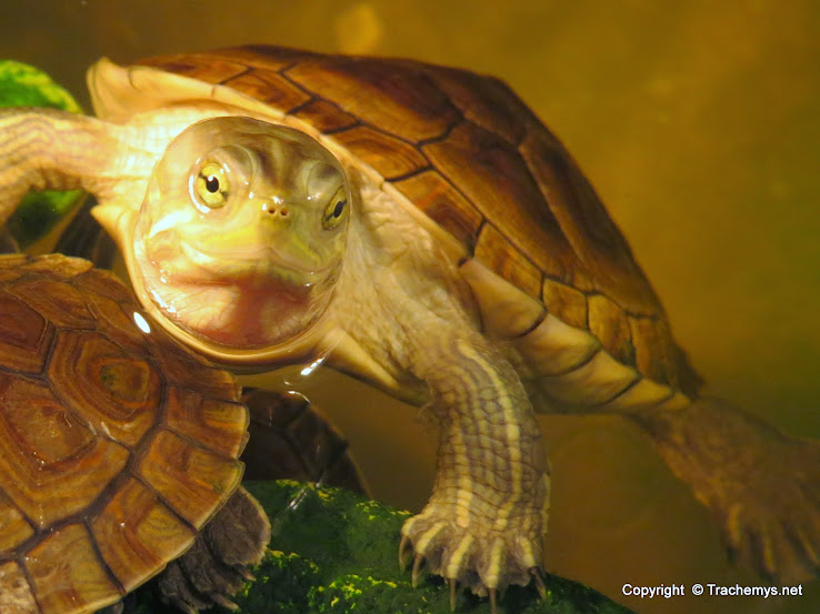 mes tortues (BK) - Page 13 IMG_6004