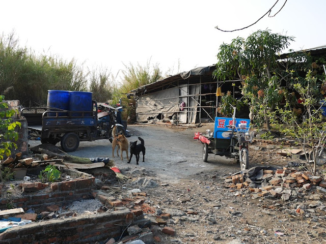 dogs next to two motorized tricycle carts south of Jiaoqiao New Road (滘桥新路) in Yangjiang