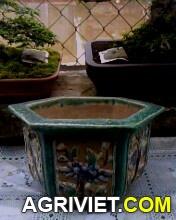 Agriviet.Com-IMG0084A.jpg
