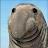 shyla alessandro avatar image