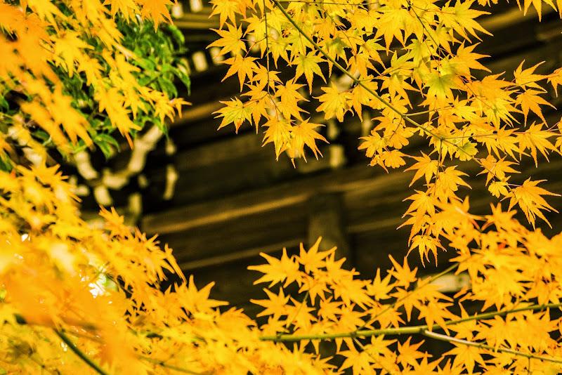 京都 紅葉 仁和寺 写真3